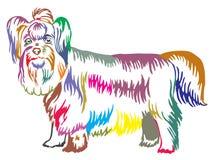 Retrato ereto decorativo colorido do yorkshire terrier Imagem de Stock Royalty Free
