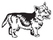 Retrato ereto decorativo do vetor de Norwich Terrier Fotografia de Stock Royalty Free