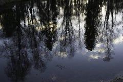 Retrato escénico de los árboles reflejados en agua Imágenes de archivo libres de regalías