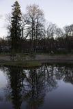 Retrato escénico de los árboles reflejados en agua Imagen de archivo