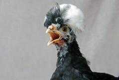 Retrato exótico de la gallina Foto de archivo libre de regalías