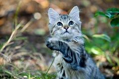 Retrato exterior de jugar lindo del gatito Fotografía de archivo