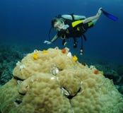 Retrato fêmea novo do mergulhador de mergulhador fotografia de stock royalty free