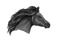 Retrato gracioso preto do cavalo Foto de Stock Royalty Free