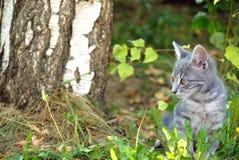 Retrato gris del gato al aire libre Imagen de archivo