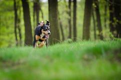 Retrato hermoso del perro en el medio del más forrest de primavera Imagenes de archivo