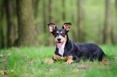 Retrato hermoso del perro en el medio del más forrest de ti de la primavera Imagen de archivo