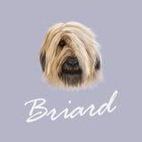 Retrato ilustrado vetor do cão de Briard fotos de stock royalty free