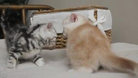 Retrato interno do grupo da família dos gatinhos vídeos de arquivo