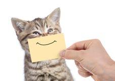 Retrato joven feliz divertido del gato con sonrisa en la cartulina amarilla aislada en blanco fotos de archivo libres de regalías