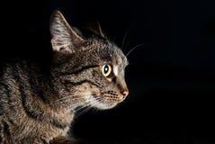 Retrato lateral del bozal de un gato con los ojos amarillos Foto de archivo