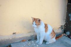 Retrato lindo del gato fotos de archivo libres de regalías