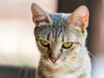Retrato lindo del gato Imagen de archivo libre de regalías