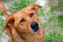 Retrato lindo del perro Imagen de archivo libre de regalías