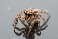 Retrato macro da aranha Foto de Stock Royalty Free