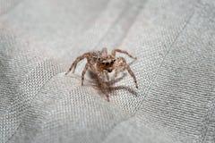 Retrato macro da aranha Imagens de Stock Royalty Free