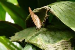 Retrato macro da borboleta foto de stock royalty free
