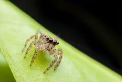 Retrato macro super da aranha Imagens de Stock
