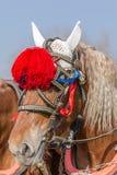 retrato marrom do cavalo Fotografia de Stock Royalty Free