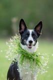 Retrato mezclado del perro de la raza al aire libre imagenes de archivo