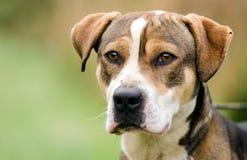 Retrato mezclado perro de la adopción del perro de la raza Imagen de archivo libre de regalías