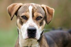 Retrato mezclado perro de la adopción del perro de la raza Fotografía de archivo libre de regalías