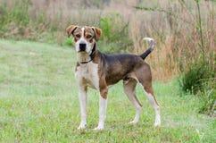 Retrato mezclado perro de la adopción del perro de la raza Imagenes de archivo