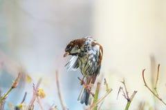 Retrato mojado de un pequeño pájaro divertido que se sienta en Bush espinoso y foto de archivo