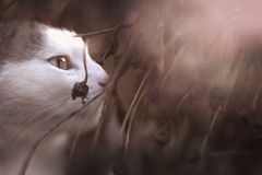 Retrato monocromático blanco y negro al aire libre de la primavera del gato del país Fotografía de archivo libre de regalías
