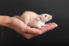 Retrato na palma Imagem de Stock