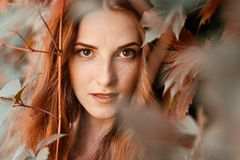 Retrato natural do outono da menina do ruivo na uva selvagem Foto de Stock Royalty Free