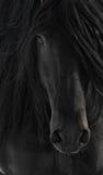 Retrato negro del caballo del Frisian Imagen de archivo