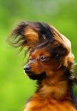 Retrato oxidado del perro imagen de archivo
