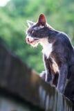 Retrato para una lengua del gato hacia fuera en la pared y el fondo verde Fotografía de archivo libre de regalías