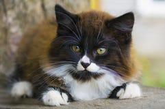 Retrato pequeno do gatinho Imagem de Stock