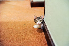 Retrato pequeno do gato Imagem de Stock Royalty Free