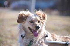 Retrato perjudicado del perro Imagen de archivo