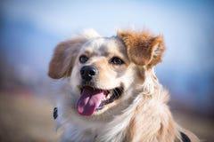 Retrato perjudicado del perro Imágenes de archivo libres de regalías