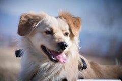 Retrato perjudicado del perro Foto de archivo
