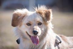 Retrato perjudicado del perro Imagenes de archivo