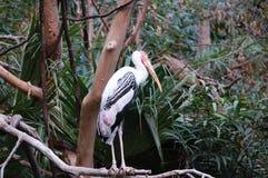Retrato pintado da cegonha no jardim zoológico imagem de stock