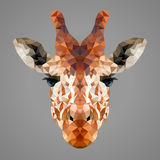Retrato polivinílico bajo de la jirafa Imagenes de archivo
