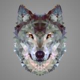 Retrato polivinílico bajo del lobo imagen de archivo