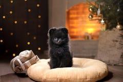 Retrato pomeranian alemán del perro Feliz Año Nuevo, la Navidad, animal doméstico en el cuarto el árbol de navidad Fotos de archivo libres de regalías