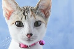 Retrato precioso del gatito Gatito lindo del gatito Fotos de archivo