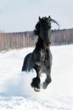 Retrato preto do cavalo no movimento na neve imagem de stock
