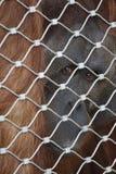 Retrato prisionero del orangután Imagen de archivo libre de regalías
