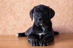 Retrato querido del perrito Fotos de archivo libres de regalías