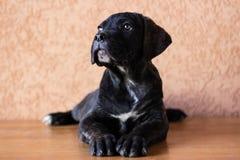 Retrato querido del perrito Imagen de archivo libre de regalías