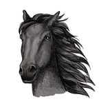 Retrato running orgulhoso preto do cavalo Fotos de Stock Royalty Free